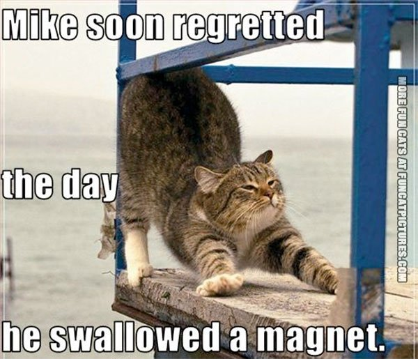 fun-cat-picture-swallowed-a-magnet