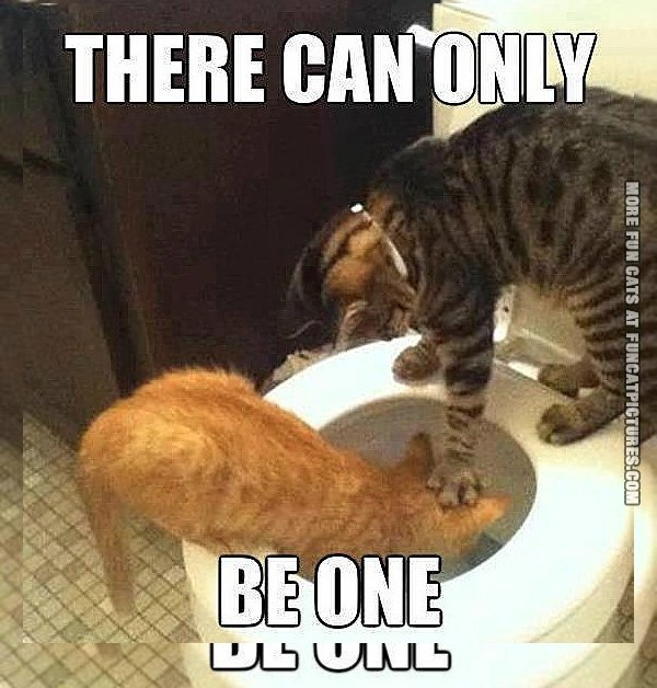 fun-cat-picture-there-can-only-be-one
