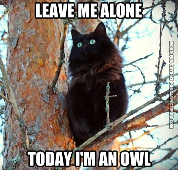 fun-cat-picture-today-im-an-owl