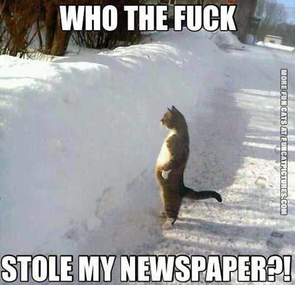 fun-cat-picture-who-stole-my-newspaper