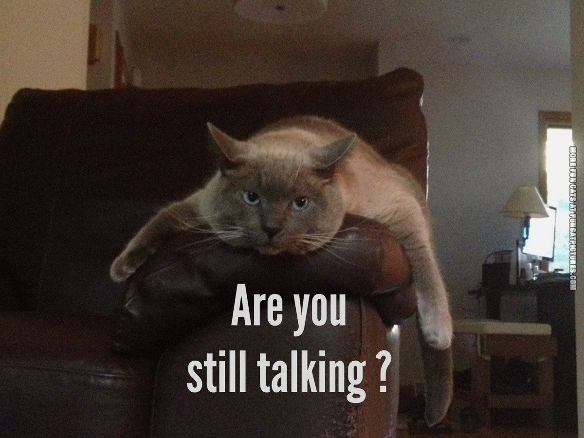 funny cat picture are you still talking