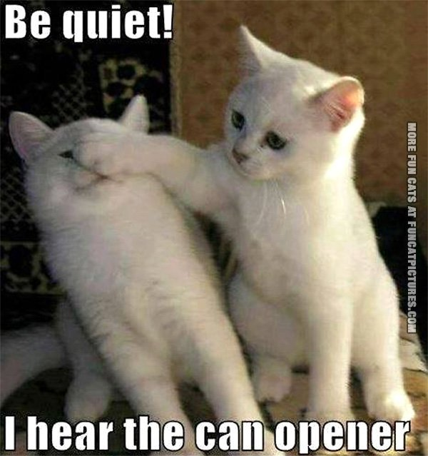 funny-cat-picture-be-quiet-i-can-hear-the-can-opener
