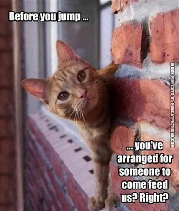 funny-cat-picture-before-you-jump