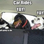 Car rides: Cats VS Dogs