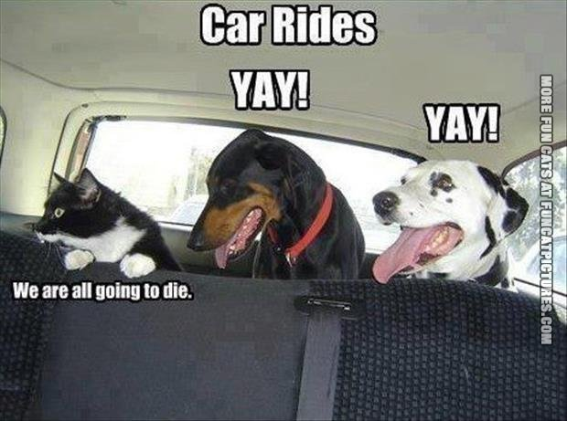 funny cat picture car rides dogs vs cats