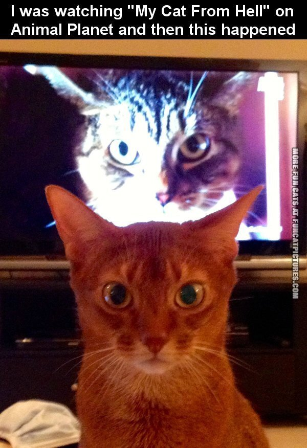 funny-cat-picture-cat-from-hell