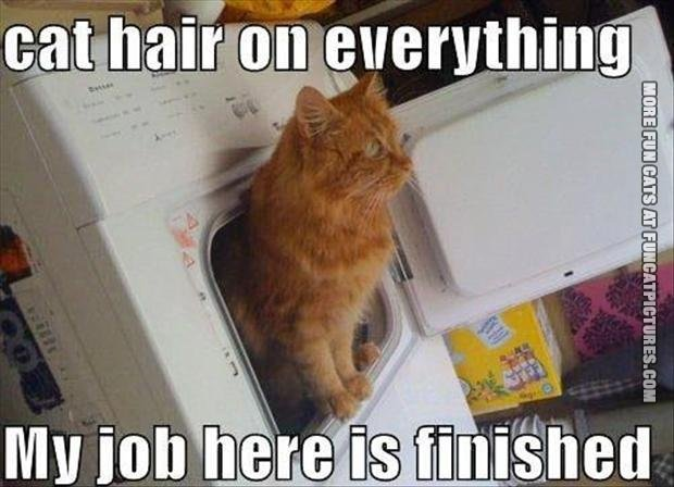 funny cat picture cat hair on everything