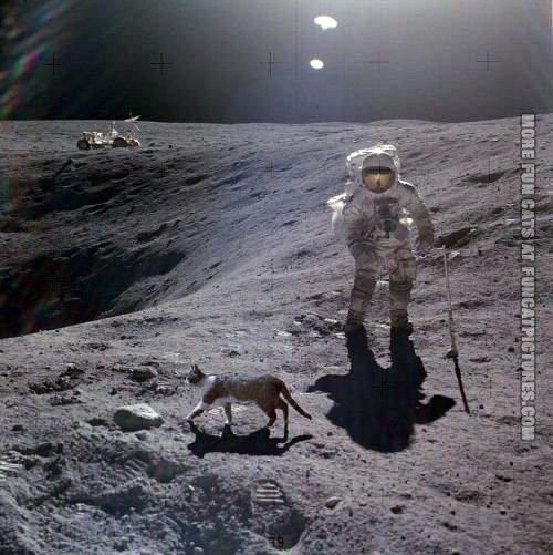 funny-cat-picture-cat-on-the-moon