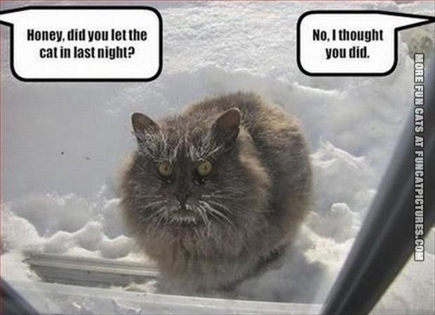 funny cat picture cat outside