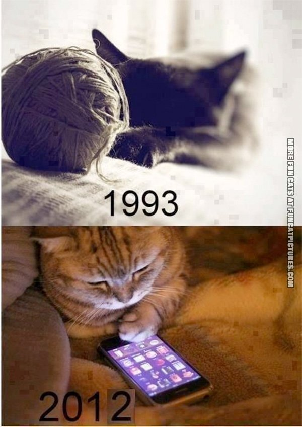 funny-cat-picture-cats-now-and-then