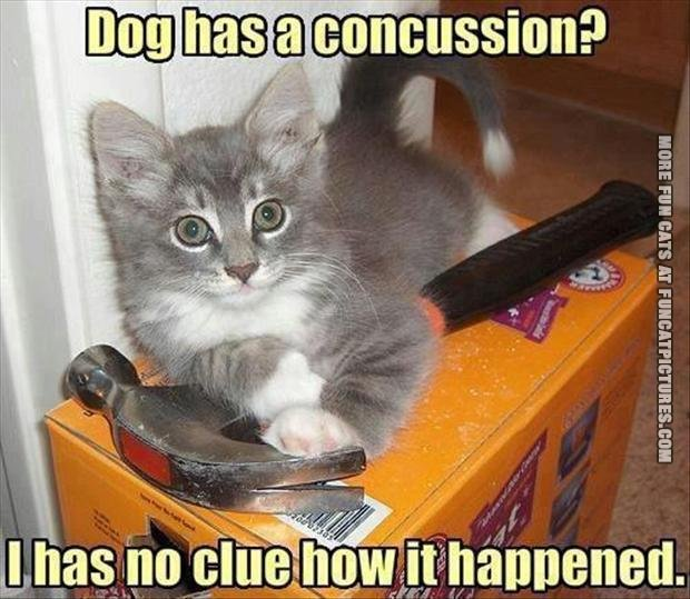 funny cat picture dog has a concution