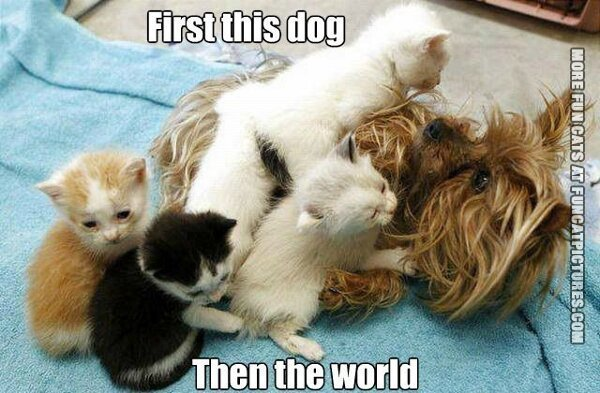funny cat picture first the dog then the world