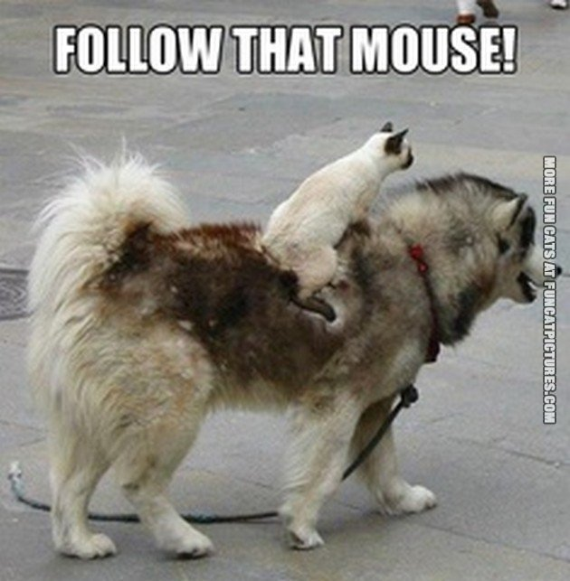 funny cat picture follow that mouse