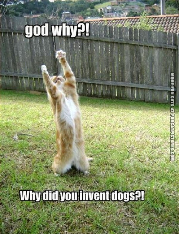 funny-cat-picture-god-why-did-you-invent-dogs