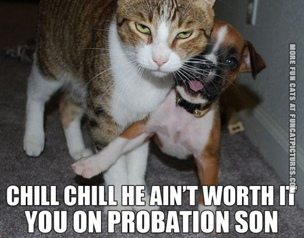 funny-cat-picture-he-aint-worth-it-youre-on-probation-son