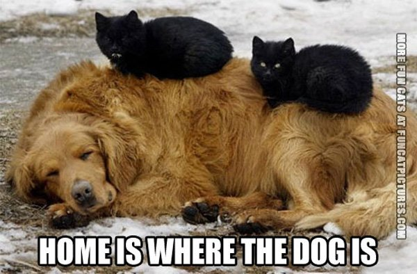 funny-cat-picture-home-is-where-the-dog-is