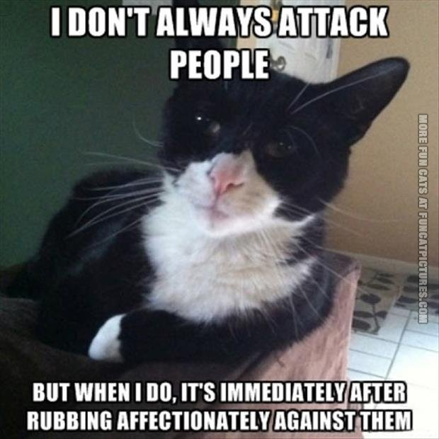 funny cat picture i dont always attack people
