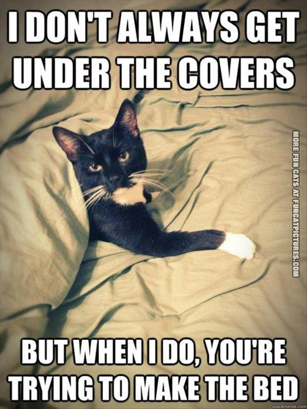 funny-cat-picture i dont always get under the cover