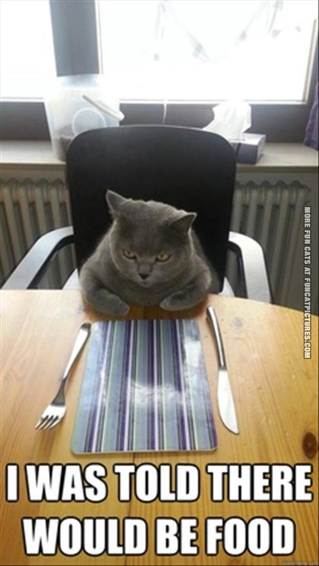 funny cat picture i was told there would be food