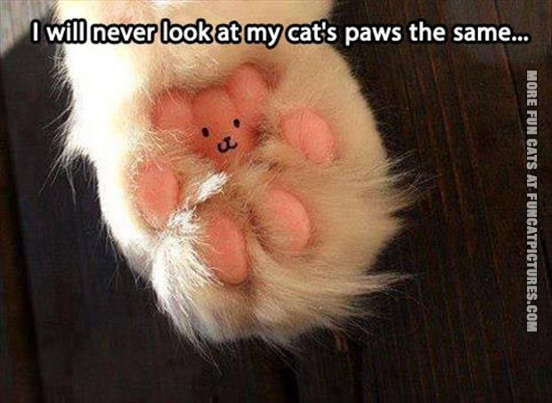 funny cat picture i will never look at my cats paws the same