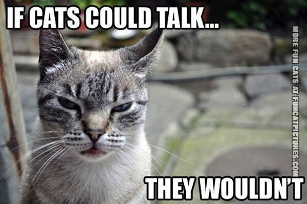 funny-cat-picture-if-cats-could-talk-they-wouldnt