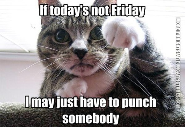 funny-cat-picture-if-today-is-not-friday