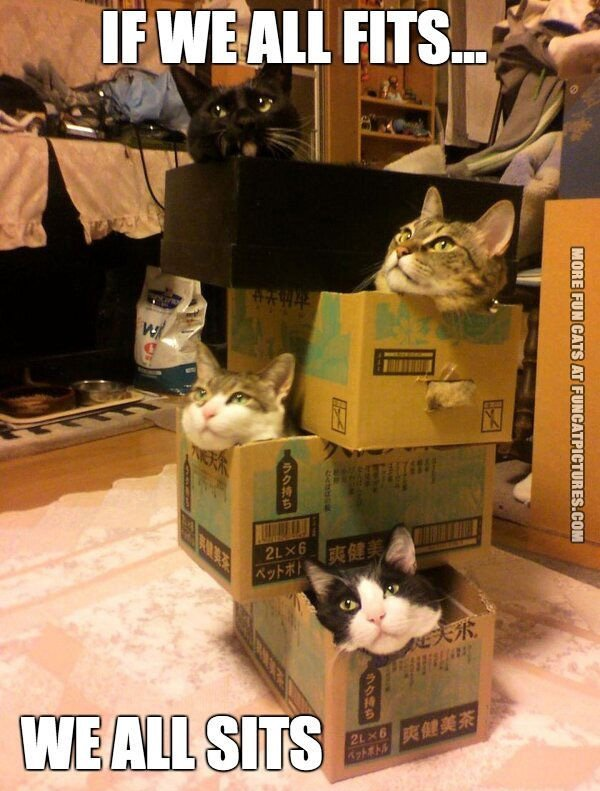 funny-cat-picture-if-we-all-fits-we-all-sits