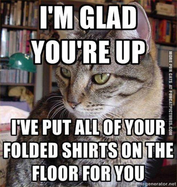 funny cat picture im glad youre up