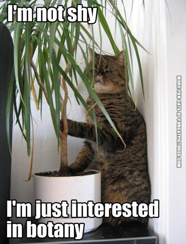 funny-cat-picture-im-not-shy-im-just-interested-in-botany
