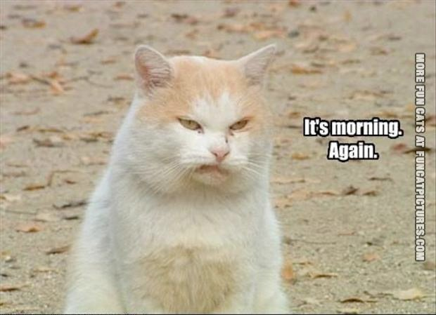 funny-cat-picture-its-morning-again