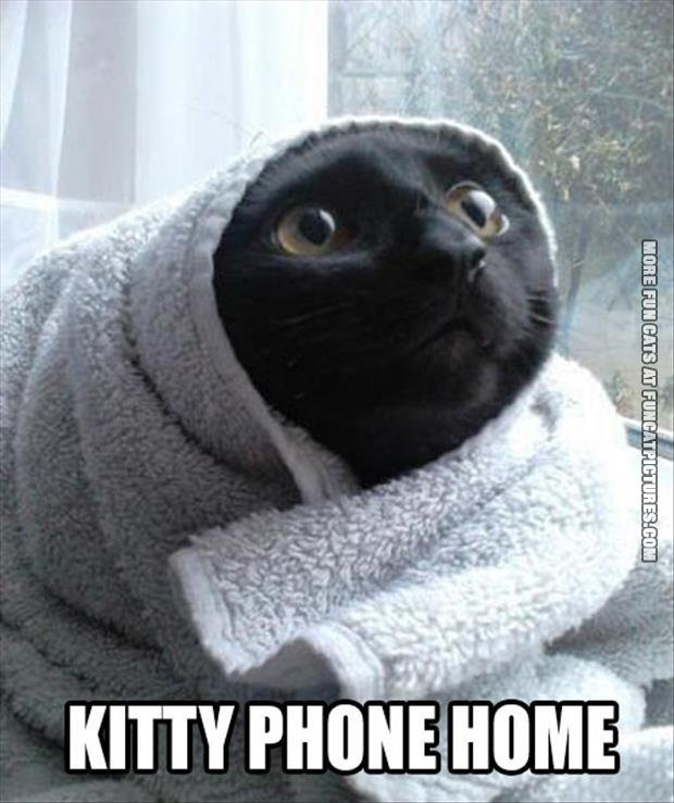 funny cat picture kitty phone home