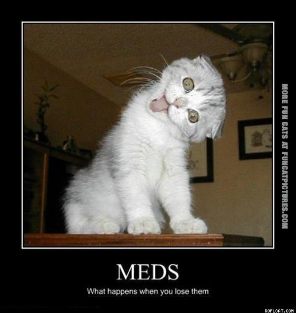 funny-cat-picture-meds-what-happens-if-you-loose-them