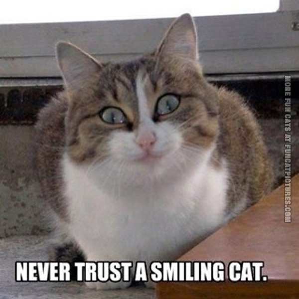 funny-cat-picture-never-trust-a-smiling-