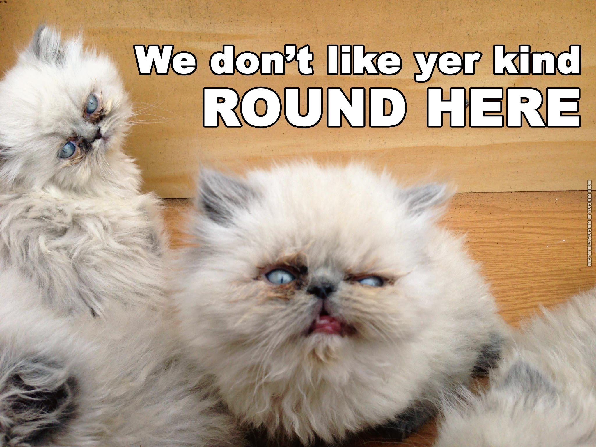funny cat picture redneck pirate cats