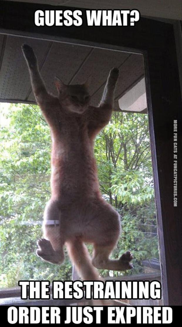 funny cat picture restraining order