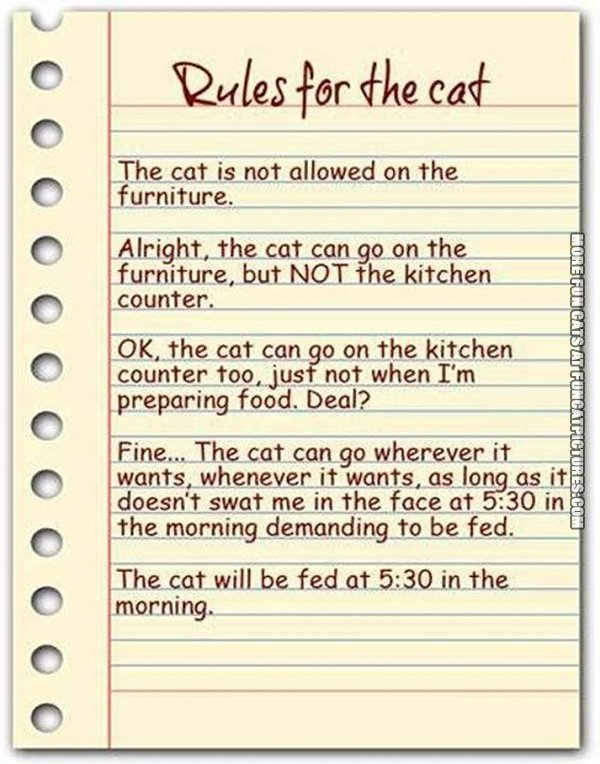 funny-cat-picture-rules-for-the-cat