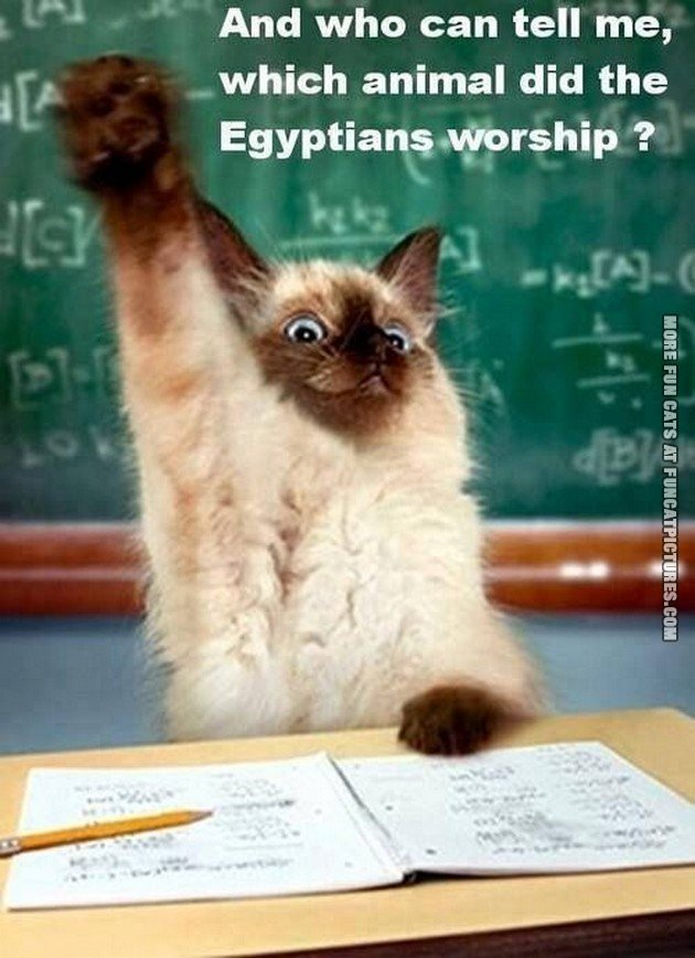funny cat picture school who could tell me which animal did the egyptians worship