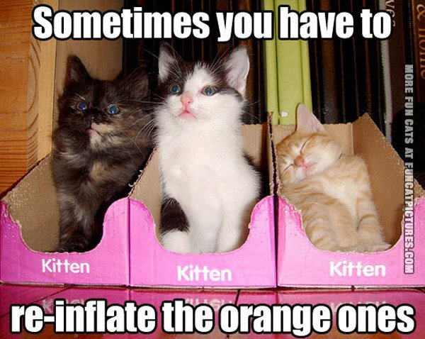 funny-cat-picture-sometimes-you-have-to-reinflate-the-orange-ones