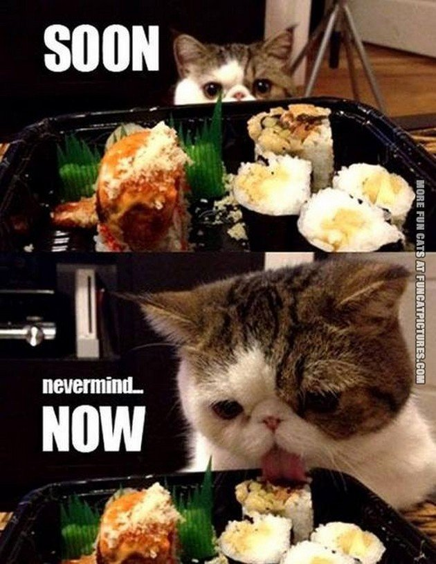 funny-cat-picture soon nevermind now