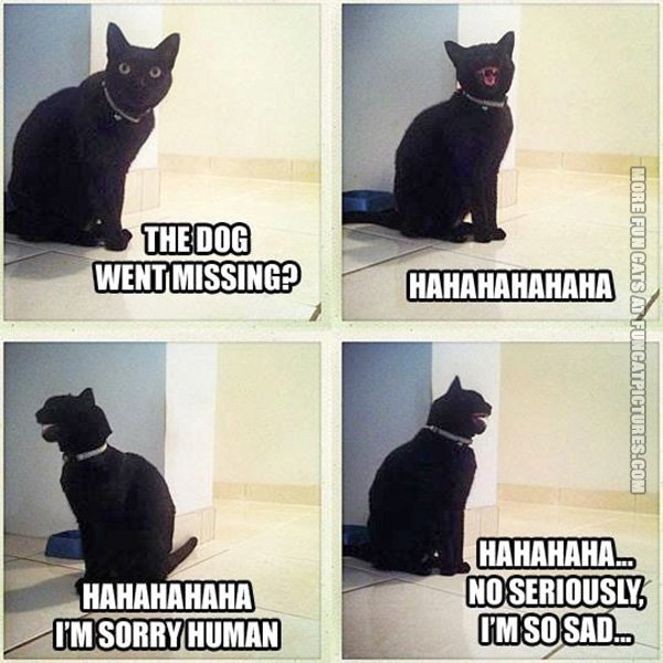funny-cat-picture-the-dog-went-missing