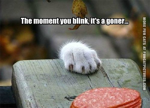 funny-cat-picture-the-moment-you-blink