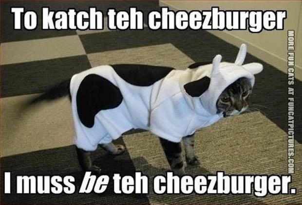 funny-cat picture to catch the cheezburger i must be the cheezburger