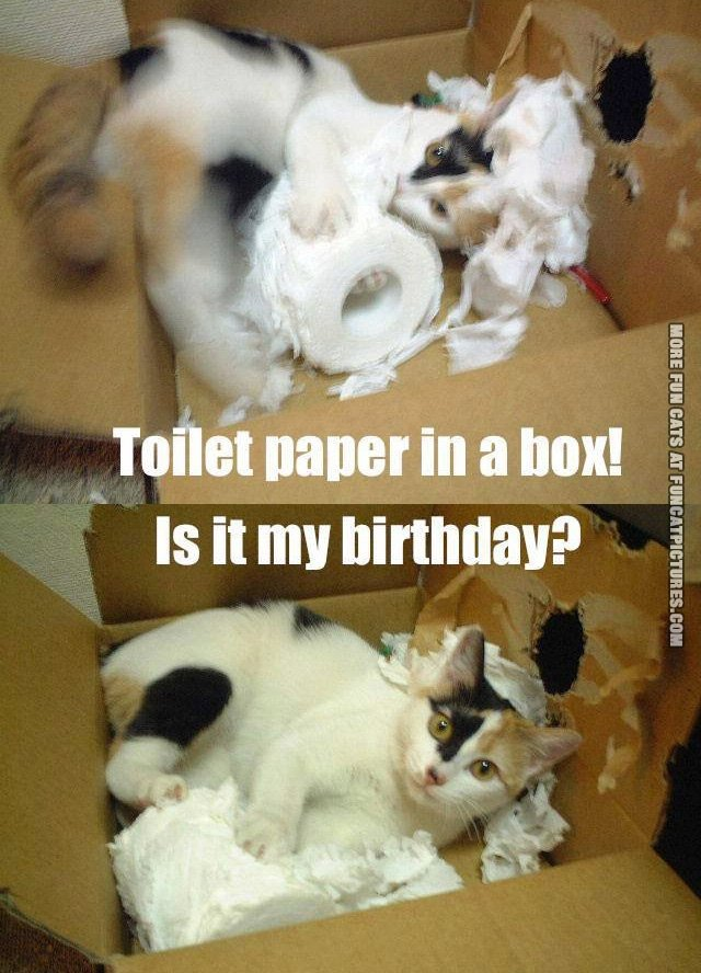 funny-cat-picture-toilet-paper-in-a-box
