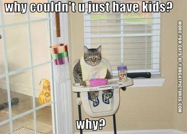 funny-cat-picture-why-couldnt-you-just-hav-cats