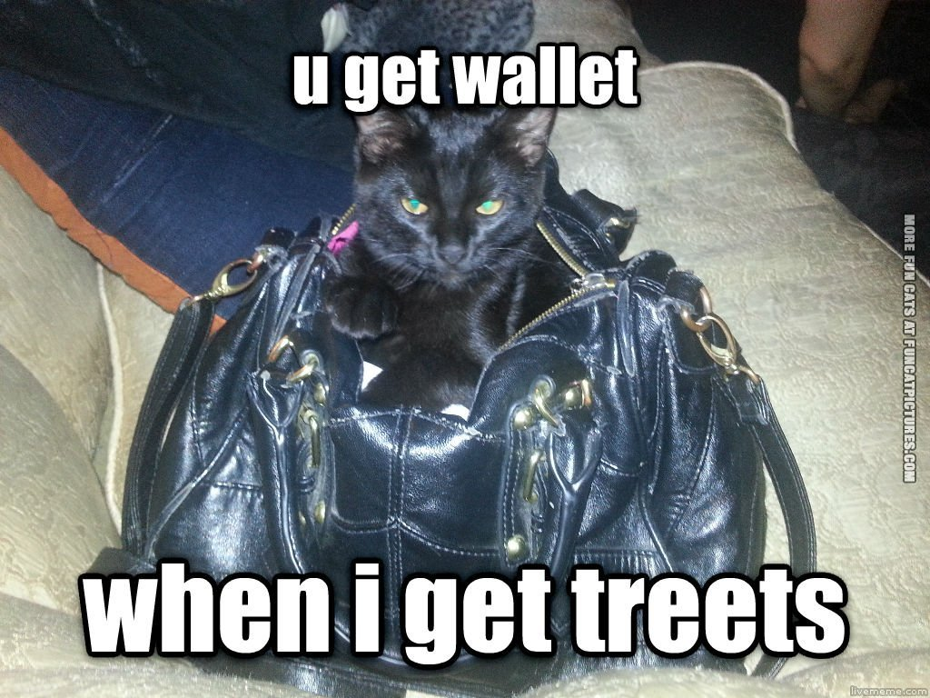 funny cat picture you get wallet when i get treets