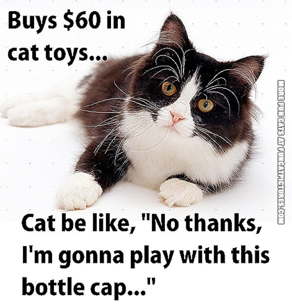 funny--cat-piture-expencive-toys-doesnt-impress