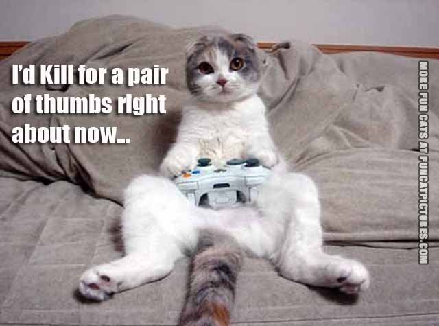id kill for a pair of thumbs cat xbox