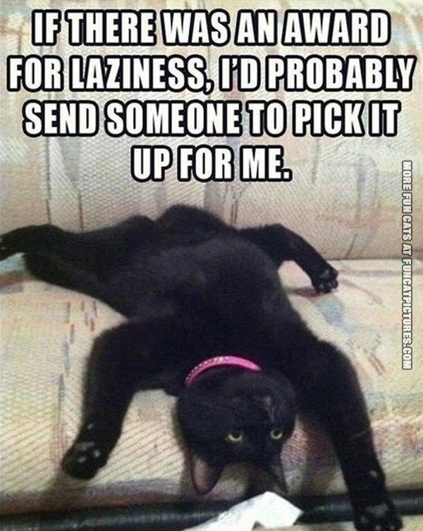 if-there-was-an-award-for-laziness