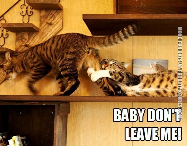 fun cat picture baby dont leave me
