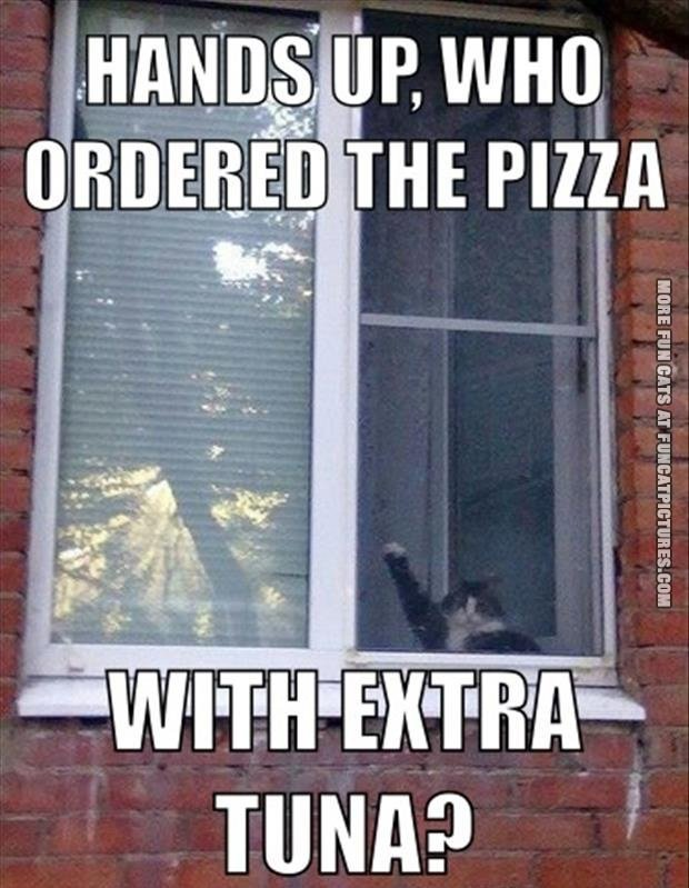 fun-cat-picture-hands-up-who-ordered-pizza-with-extra-tuna